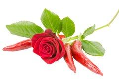 Rode rozen 4 Stock Afbeeldingen