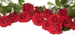 Rode rozen Royalty-vrije Stock Foto