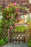 Rode rozen die op houten omheining beklimmen Stock Foto