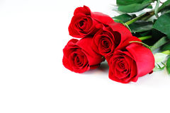 Rode rozen die op witte achtergrond leggen stock foto's