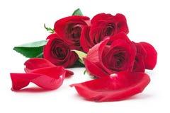 Rode rozen en de verspreide bloemblaadjes Stock Fotografie