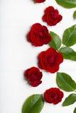 Rode rozen en groene bladeren op een witte houten lijst Uitstekende Flor Royalty-vrije Stock Afbeeldingen