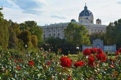 Rode rozen in het eerste plan en het Museum van Fijne Kunst op de achtergrond in Wenen Stock Fotografie