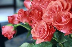 Rode rozen met dauwdalingen Stock Afbeelding