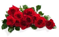 Rode rozen met groene bladeren Stock Afbeeldingen