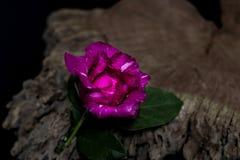 Rode rozen met oud hout Stock Afbeelding