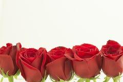 Rode rozen op één rij vanaf de bovenkant Royalty-vrije Stock Afbeeldingen