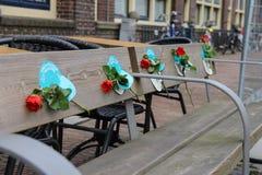 Rode rozen op de houten bank in Utrecht, Nederland royalty-vrije stock foto