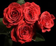 Rode rozen op donkere achtergrond royalty-vrije stock afbeeldingen