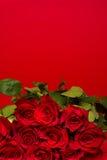 Rode rozen op een rode achtergrond royalty-vrije stock afbeeldingen