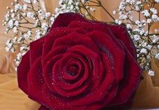 Rode rozen op witte achtergrond royalty-vrije stock afbeelding