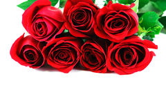 Rode rozen op witte achtergrond stock foto's
