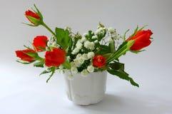 Rode rozen in pot stock afbeelding