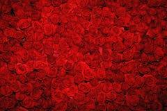 Rode rozenachtergrond Stock Foto