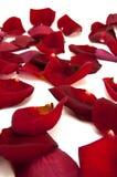 Rode rozenbloemblaadjes Royalty-vrije Stock Fotografie