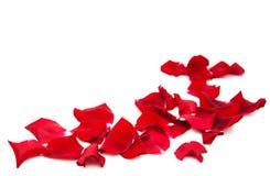rode rozenbloemblaadjes Royalty-vrije Stock Foto's