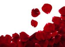 rode rozenbloemblaadjes Stock Afbeelding