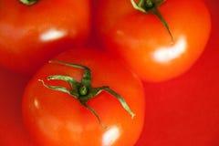 Rode Sappige Tomaten Royalty-vrije Stock Foto