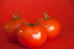 Rode Sappige Tomaten Royalty-vrije Stock Afbeelding