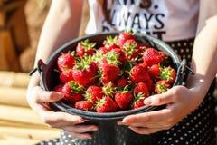 Rode sappige verse aardbeienclose-up in een mand stock fotografie