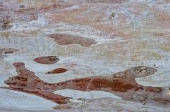 Rode schil royalty-vrije stock afbeelding