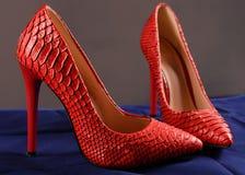 Rode schoenen van snakeskin Royalty-vrije Stock Afbeelding