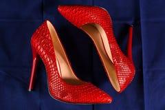 Rode schoenen van snakeskin Stock Foto
