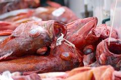 Rode schorpioenvis klaar voor markt Royalty-vrije Stock Afbeelding