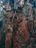 Rode schors Stock Afbeeldingen
