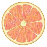 Rode sinaasappel royalty-vrije illustratie