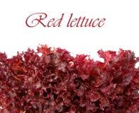 Rode sla Stock Foto