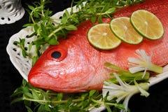 Rode Snapper op een plaat Stock Foto
