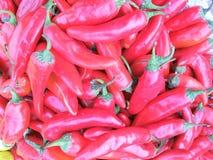 Rode Spaanse peper Stock Afbeeldingen