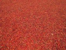 Rode Spaanse peper Royalty-vrije Stock Afbeelding