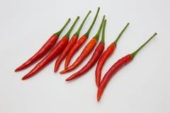 Rode Spaanse peper kruidige zeer heerlijk Royalty-vrije Stock Foto