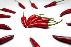 Rode Spaanse peperpeper Royalty-vrije Stock Afbeeldingen