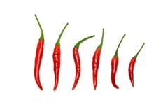 Rode Spaanse peperpeper Royalty-vrije Stock Foto's