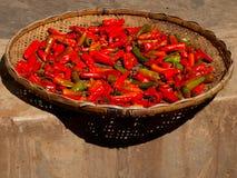 Rode Spaanse peperpeper die in de zon in Bhutan drogen Royalty-vrije Stock Fotografie