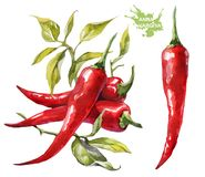 Rode Spaanse peperspeper De waterverf van de handtekening op witte achtergrond royalty-vrije illustratie
