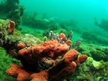 Rode spons en overzeese staaf Royalty-vrije Stock Afbeeldingen