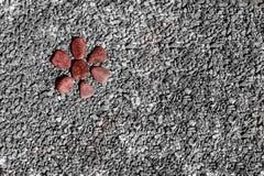 Rode steenbloem op de rotsen Stock Afbeeldingen