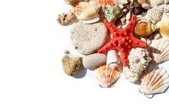 Rode ster en overzeese shells Stock Foto's