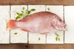 Rode tandbaarsvissen Stock Fotografie