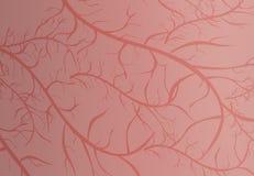 Rode textuur stock illustratie