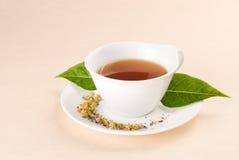 Rode thee met groen blad Stock Foto