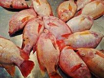 Rode Tilapia bevroren die vissen in markt worden verkocht Royalty-vrije Stock Foto's