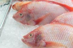 Rode tilapia vissen op ijs op verkoop in supermarkt vers te houden royalty-vrije stock afbeelding