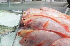 Rode tilapia vissen op ijs op verkoop in supermarkt vers te houden royalty-vrije stock afbeeldingen
