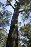 Rode Tinteling, Vallei van de Reuzen, WA, Australië royalty-vrije stock fotografie