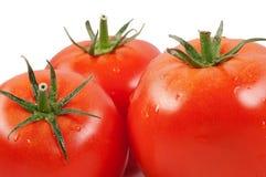 Rode tomaat. Stock Fotografie